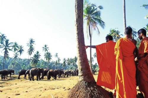 Sri Lanka:  Jet tours rouvre la destination